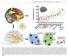Summary of temporal dynamics of brain regions, network construction and graph metrics during pain.